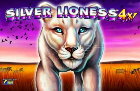 Silver Lioness